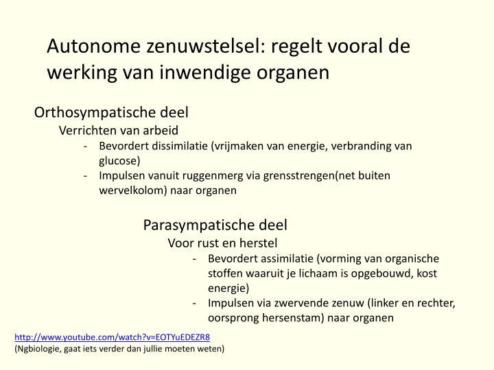 Autonome zenuwstelsel: regelt vooral de werking van inwendige