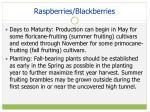 raspberries blackberries
