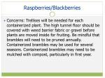 raspberries blackberries1