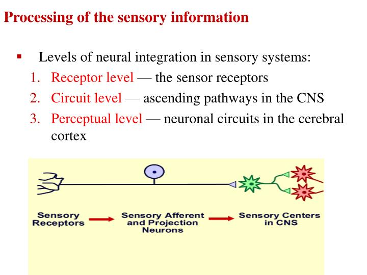 Processing of the sensory information