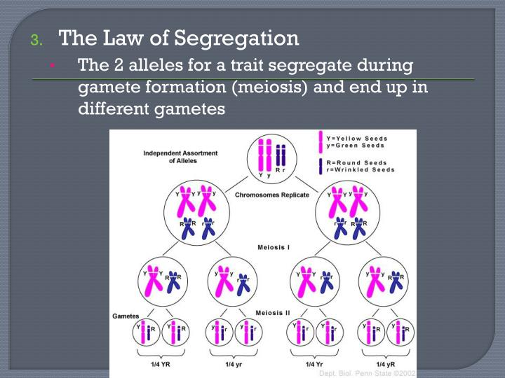 The Law of Segregation