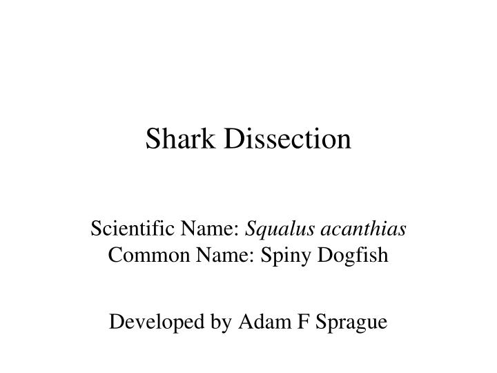 shark dissection n.