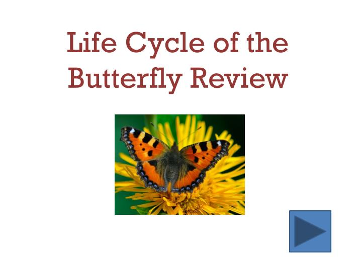 life cycle of the butterfly review n.