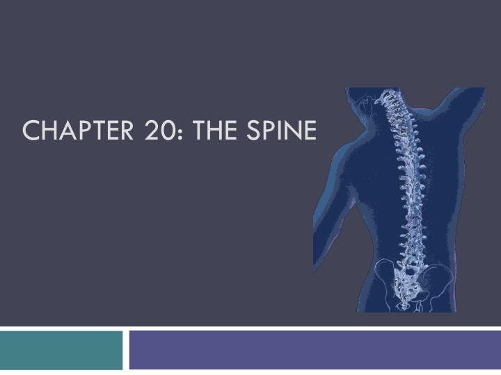 chapter 20 the spine n.