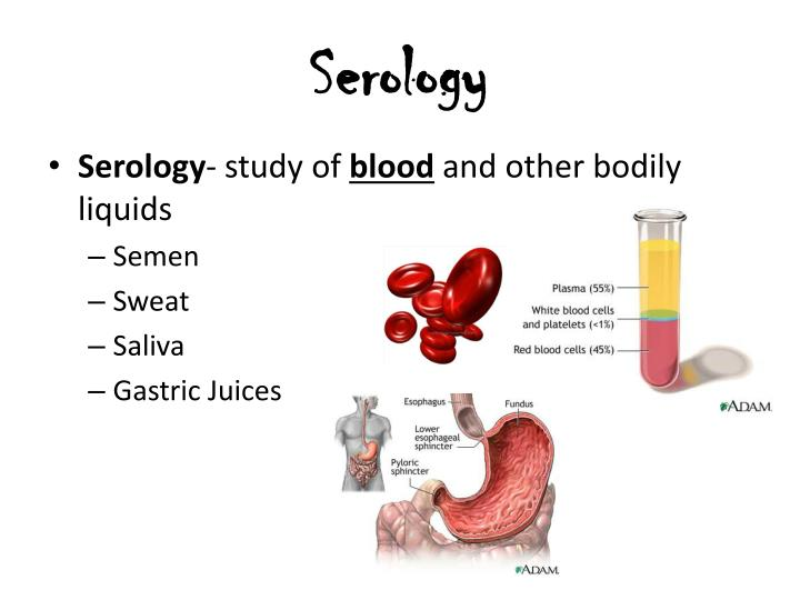 Serology Study Of Blood And Other Bodily Liquids