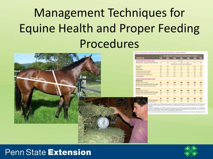 management techniques for equine health and proper feeding procedures n.