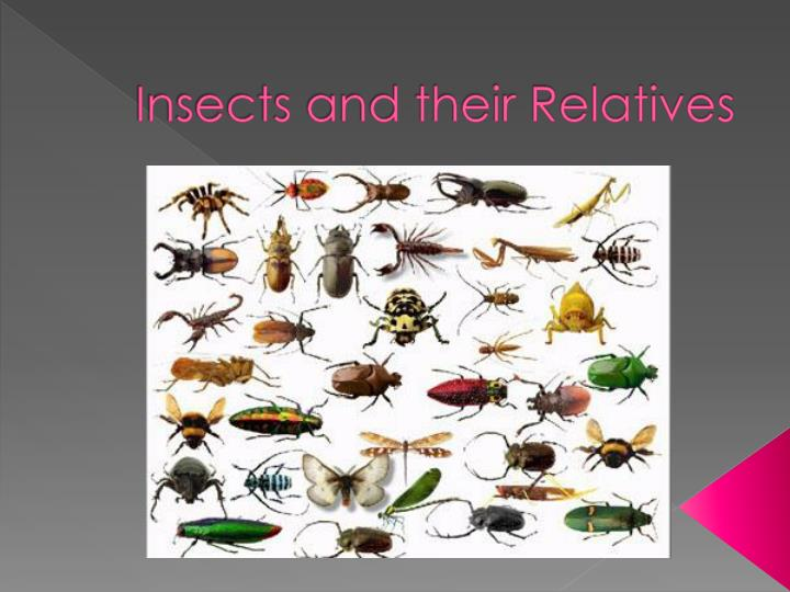 insects and their relatives n.