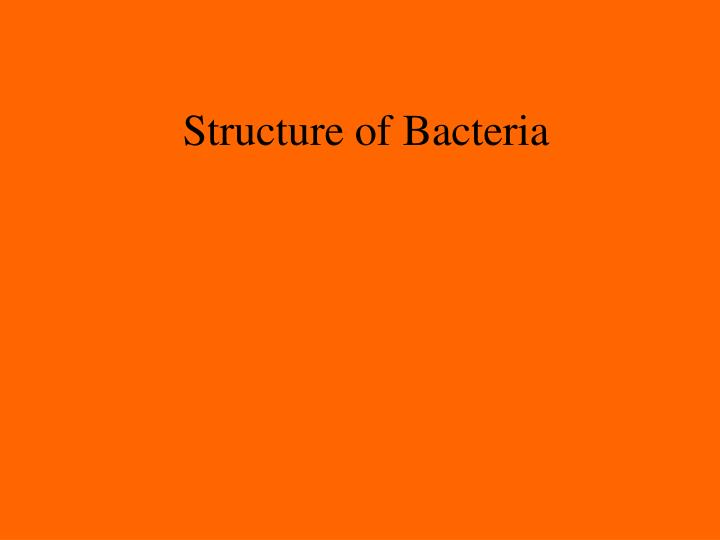 structure of bacteria n.