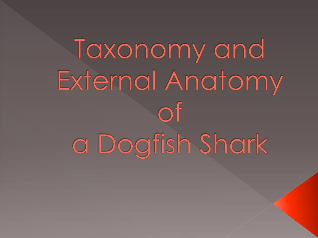 Ppt Taxonomy And External Anatomy Of A Dogfish Shark Powerpoint