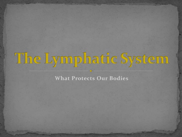the lymphatic system n.