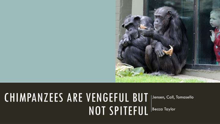 chimpanzees are vengeful but not spiteful n.