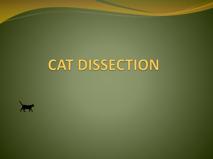 cat dissection n.