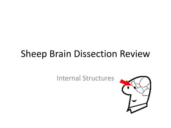 sheep brain dissection review n.
