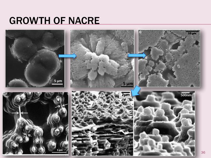 Growth of Nacre