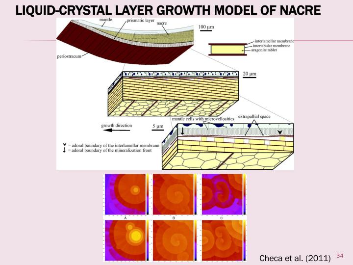 Liquid-Crystal Layer Growth Model of Nacre