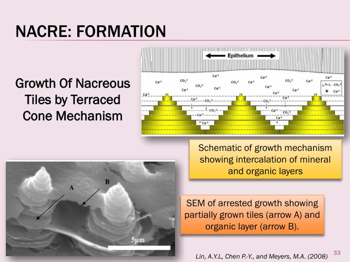 Nacre: Formation