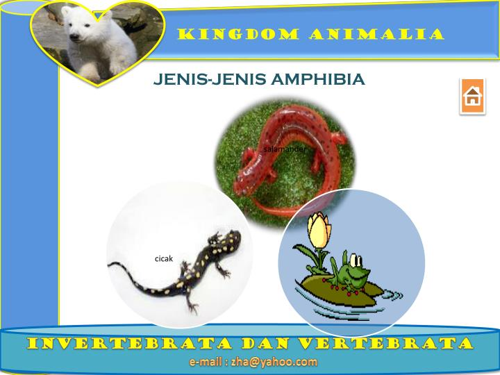 Image of: Animal Kingdom Jenisjenis Amphibia Youtube Ppt Assalamualaikum Kingdom Animalia Powerpoint Presentation Id