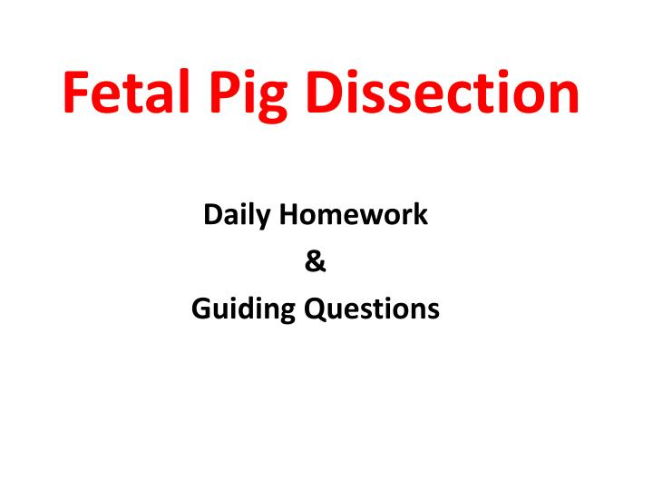 27 fetal pig questions 2 Questions how many chambers does the pig heart have view the human torso model on your bench locate the same organs you found above on the fetal pig.