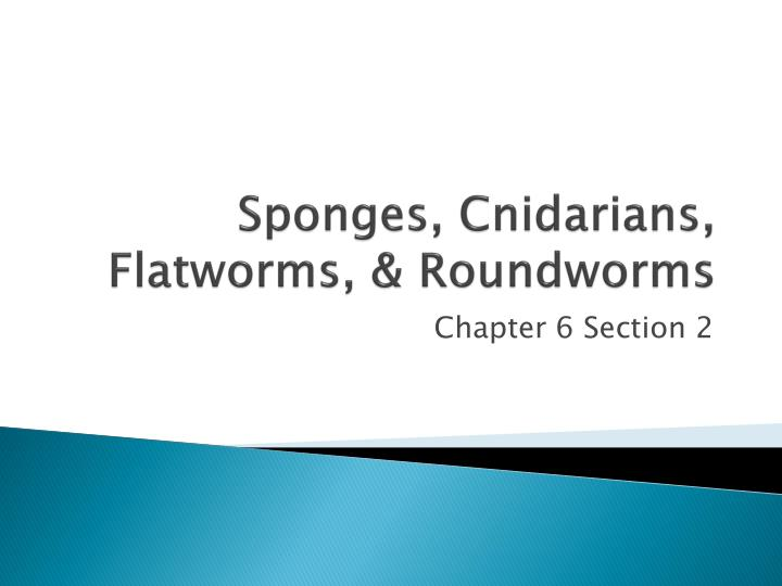 sponges cnidarians flatworms roundworms n.