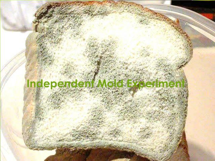 independent mold experiment n.