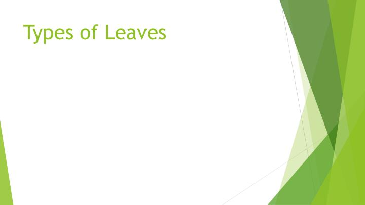 types of leaves n.