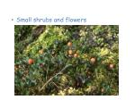 plants of the tundra7