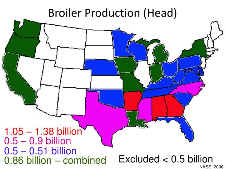 Broiler Production (Head)