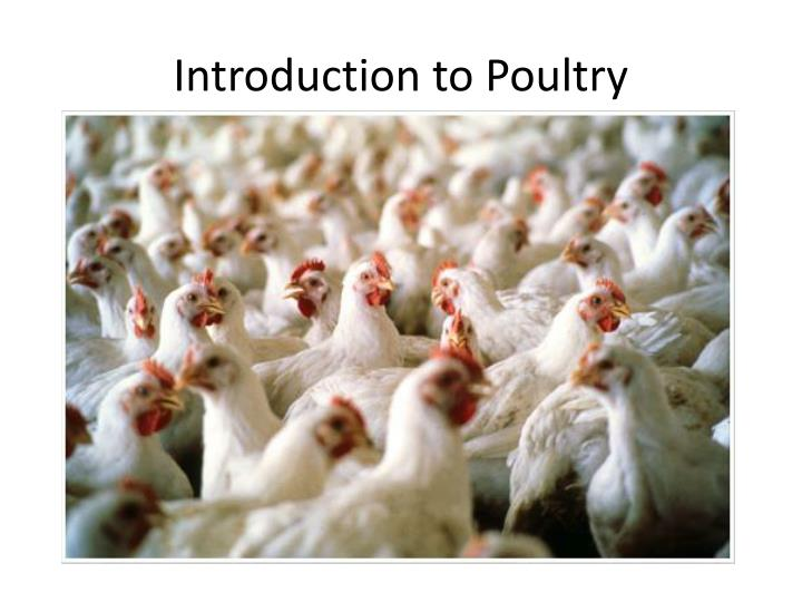 Introduction to Poultry