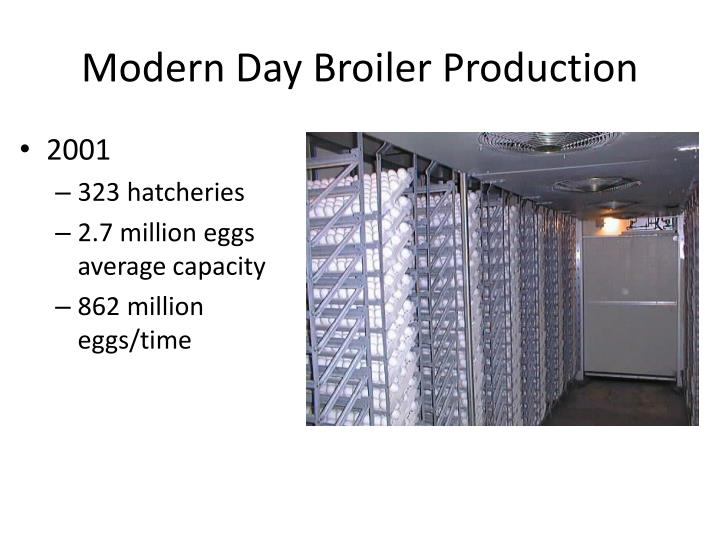 Modern Day Broiler Production
