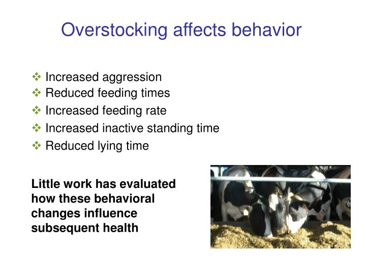 Overstocking affects behavior