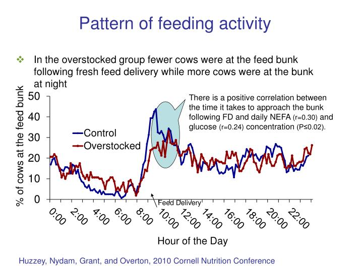 There is a positive correlation between the time it takes to approach the bunk following FD and daily NEFA