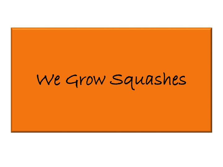 We Grow Squashes