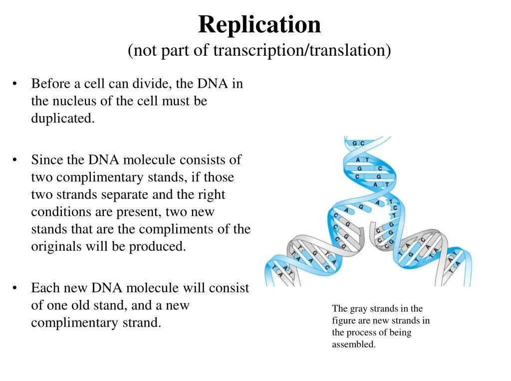 Nnhsbiology / transcription translation.