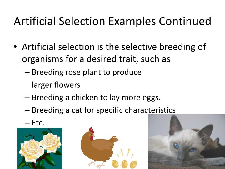 Ppt Evolution As Genetic Change 16 2 Types Of Selection
