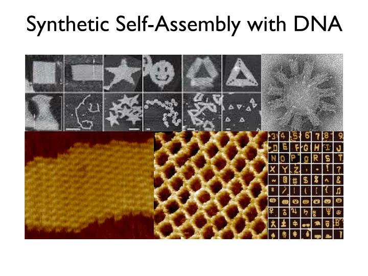 Synthetic Self-Assembly with DNA