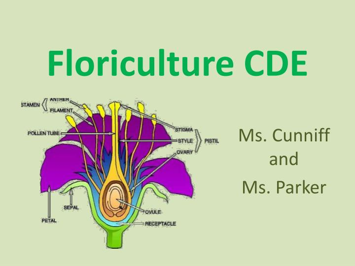 floriculture report A comprehensive analysis of the global floriculture market is been done in this intelligence report it includes the investigations done on the past progress, ongoing market scenarios, and future prospects.