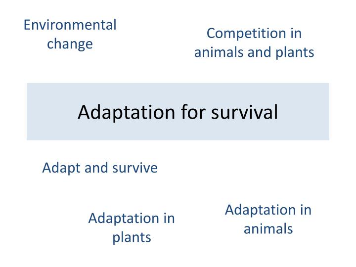 adaptation for survival n.