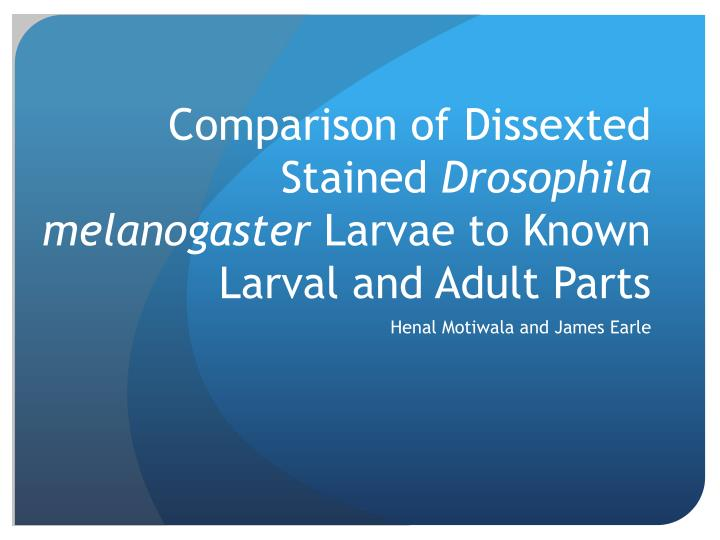 comparison of dissexted stained drosophila melanogaster larvae to known larval and adult parts n.