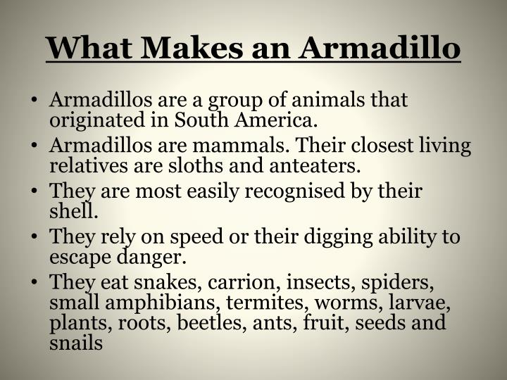 What makes an armadillo