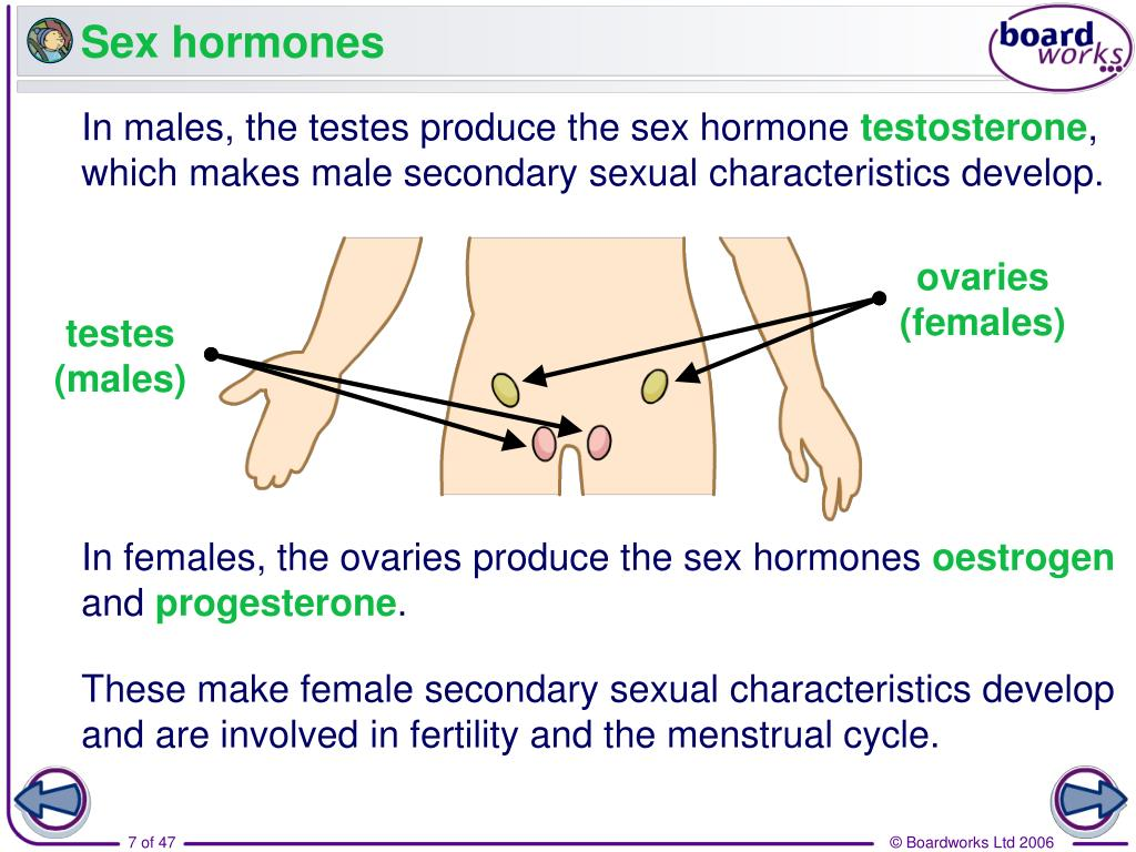 female sex hormone involved in the female menstrual cycle in Townsville
