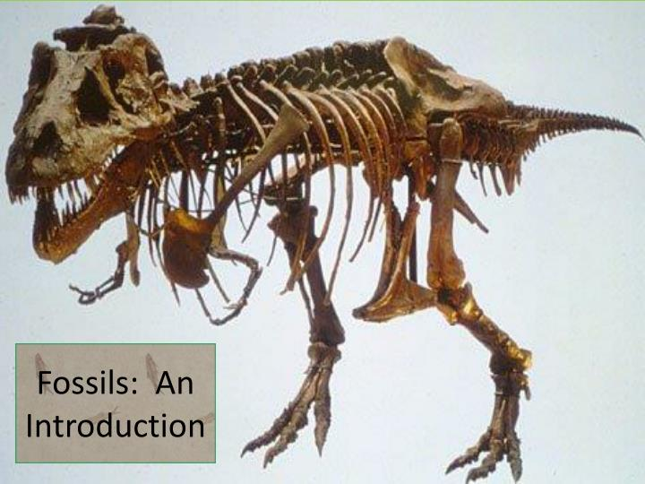 Fossils an introduction