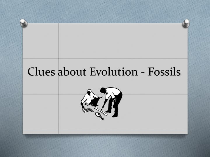 clues about evolution fossils n.