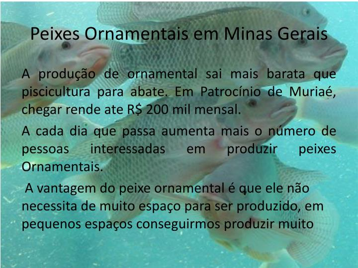 Peixes Ornamentais em Minas Gerais