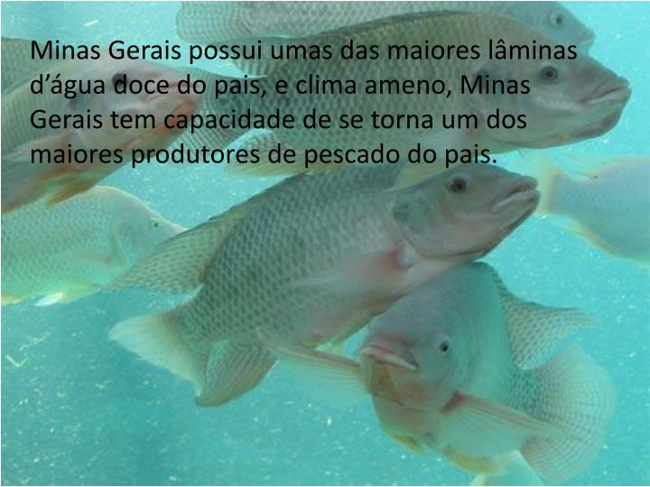 Minas Gerais possui umas das maiores lâminas d'água doce do pais, e clima ameno, Minas Gerais tem capacidade de se torna um dos maiores produtores de pescado do pais.