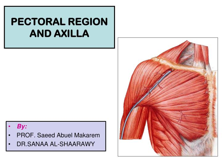 Ppt Pectoral Region And Axilla Powerpoint Presentation Id2024410