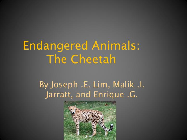 essay on animals and the environment Animals are important essay sample animals are one of god's greatest masterpieces animals play an extremely important part in the lives of humans animals affect everyone's life, their presence is vital importance of animals ranges from companionship to food source and it varies by person pets impact our lives in a positive way, as do.