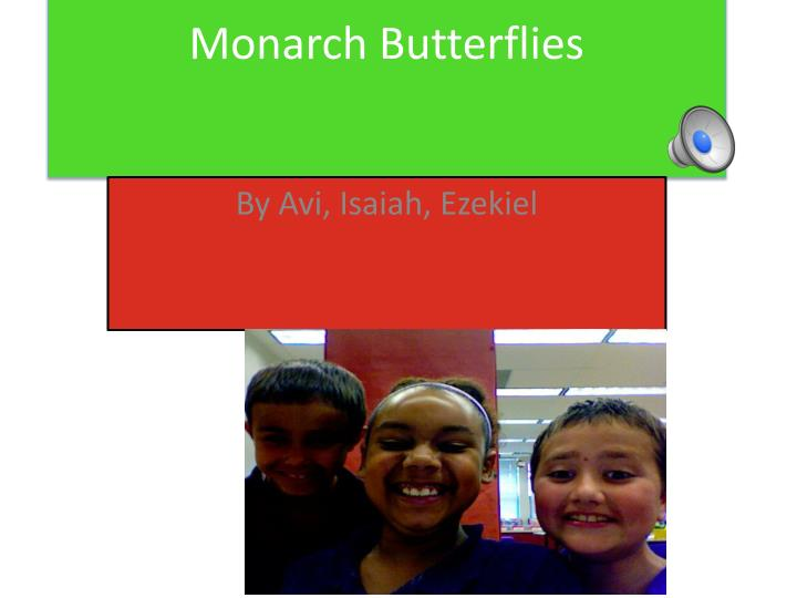 monarch butterflies n.