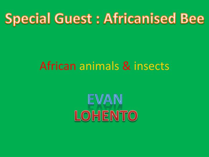 african animals insects n.