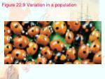 figure 22 9 variation in a population
