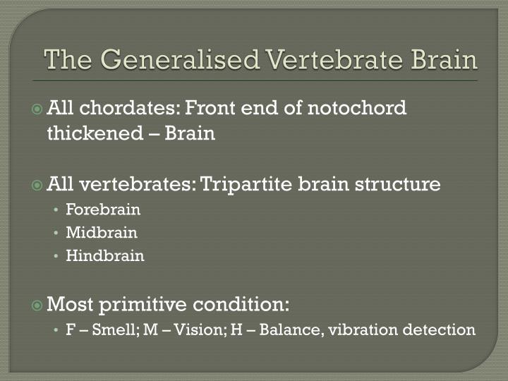 The generalised vertebrate brain1